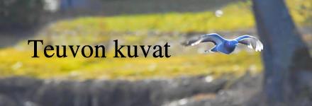 Teuvo Vehkalahti